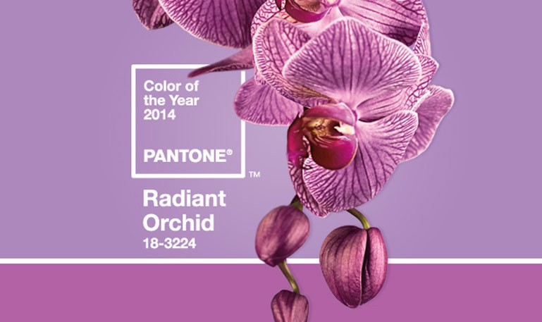 Radiant-Orchid9