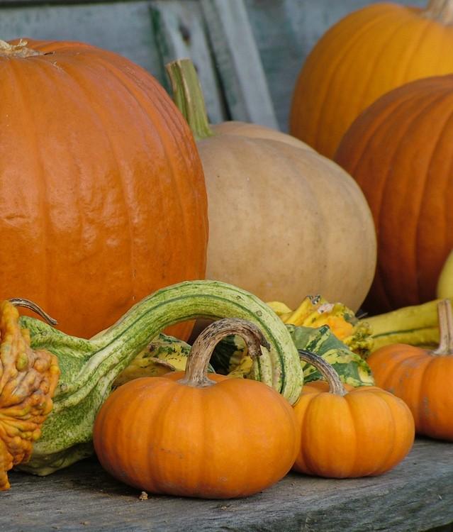 pumpkins-1388678-639x750