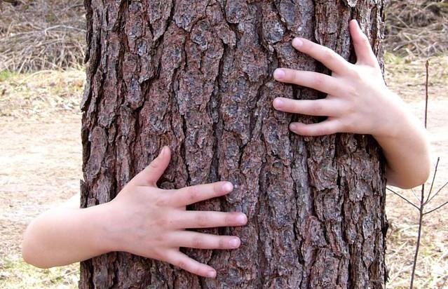 hug-a-tree-1317122-639x412